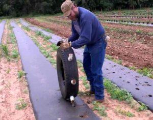 как сделать отверстия на мульчирующей пленки для растений