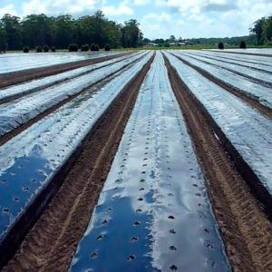 мульчирование почвы черной пленкой